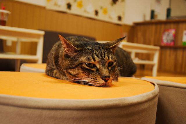 Cat_Cafes