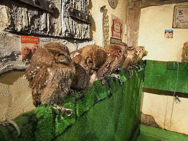 Owl_Cafes